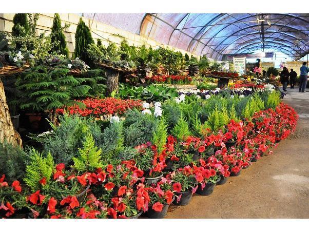 32 هزار گلدان گل و گیاه زینتی از نوشهر به خارج از کشور صادر شد