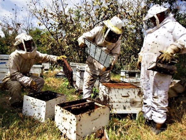 تولید 10 کیلوگرم عسل در هر کندو