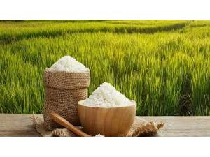 صادرات 25 تن برنج آمل به کانادا